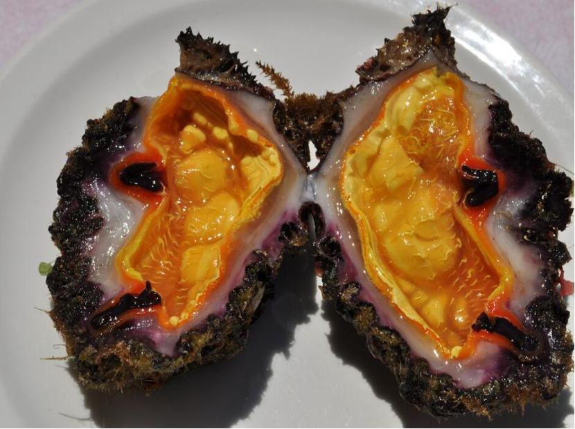 clam-special
