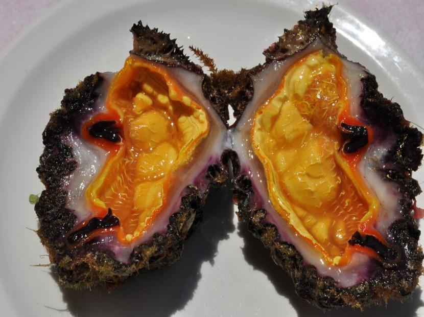 clam-special22